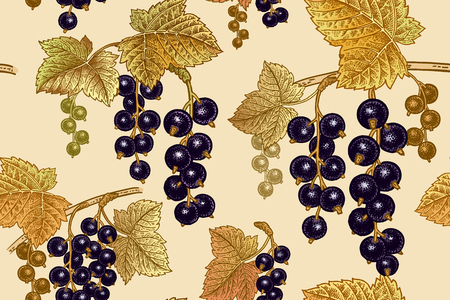 Black currant berries. Seamless pattern. Realistic fruit, branch and gold leaf. Vegan food. Vector illustration art. Vintage engraving. Hand drawing. Nature motifs for kitchen design.