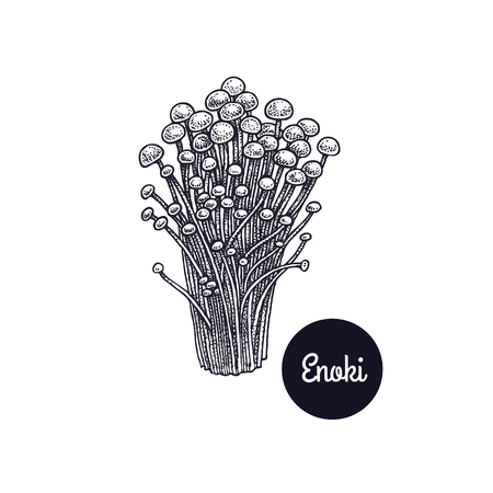 Enoki mushrooms. Hand drawing. Style Vintage engraving. Vector illustration art. Black and white. Isolated objects of nature. Cooking food design for menu, store signs, markets.