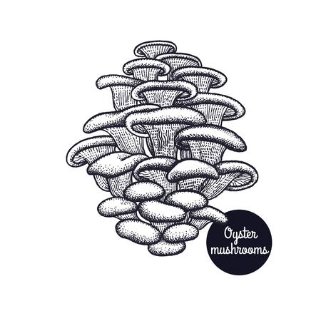 牡蠣のキノコ。手描き。スタイルヴィンテージ彫刻。ベクターイラストアート。黒と白自然の孤立したオブジェクト。メニュー、店舗看板、市場の  イラスト・ベクター素材