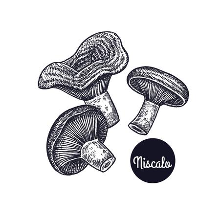 Funghi Niscalo Disegno a mano Incisione stile vintage. Illustrazione arte vettoriale Bianco e nero. Oggetti isolati della natura. Cucinare design alimentare per menu, insegne di negozi, mercati. Vettoriali