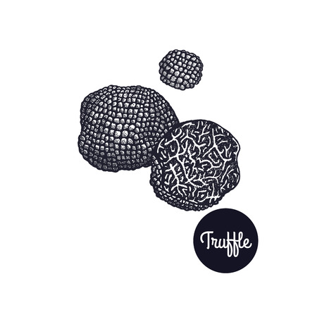 Black Truffle. Gourmet mushroom. Hand drawing. Style Vintage engraving. Vector illustration art. Black and white. Isolated objects of nature. Cooking food design for menu, store signs, markets. Фото со стока - 88363377