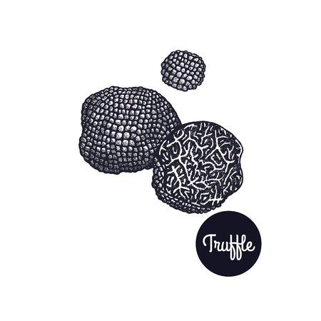 Zwarte truffel. Gastronomische paddenstoel. Handtekening. Stijl Vintage gravure. Vector illustratie kunst. Zwart en wit. Geïsoleerde objecten van de natuur. Koken voedsel ontwerp voor menu, winkel tekenen, markten.