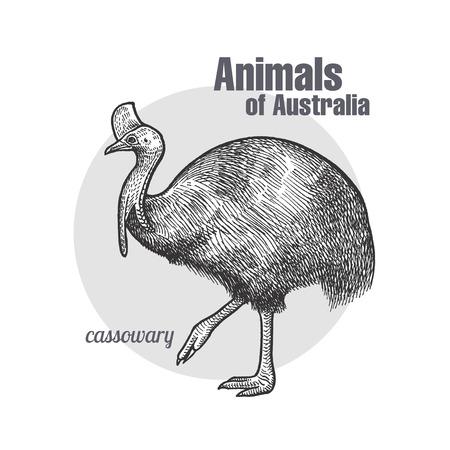 ヒクイドリ鳥手描き。オーストラリア シリーズの動物。ビンテージ彫刻スタイル。ベクトル イラスト。黒と白。自然自然主義的なスケッチのオブジ  イラスト・ベクター素材