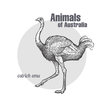 Ostrich Emu bird hand drawing. Animals of Australia series. Vintage engraving style. Vector illustration art. Black and white. Object of nature naturalistic sketch.