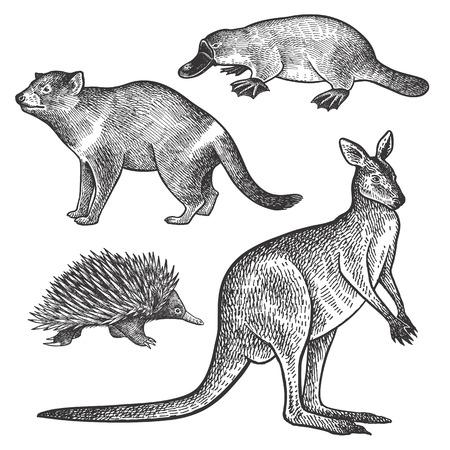 타 즈 마니아 악마, 오리너구리, 왈 라비 또는 캥거루, 바리 손 드로잉 세트. 호주 동물 시리즈입니다. 빈티지 조각 스타일. 벡터 아트 그림입니다. 검정