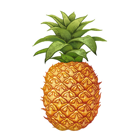 Pineapple. Realistic hand drawing made with colored pencils. Vector illustration. Fruit isolated on white background. Plant for decorating food packaging, kitchen design. Vintage. Vettoriali