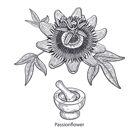 Realistic medical plant passionflower, mortar and pestle. Vintage engraving. Vector illustration art. Black and white. Hand drawn of flower. Alternative medicine series.
