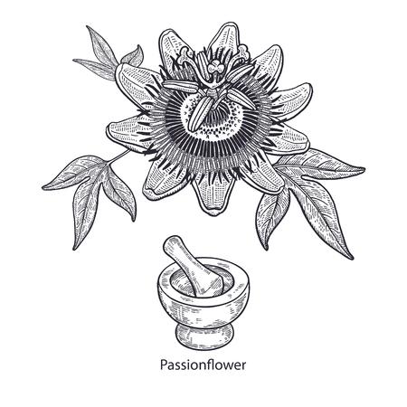 Realistische medische planten passiebloem, vijzel en stamper. Vintage gravure Vector illustratie kunst. Zwart en wit. Hand getekend van bloem. Alternatieve geneeskunde serie. Stock Illustratie