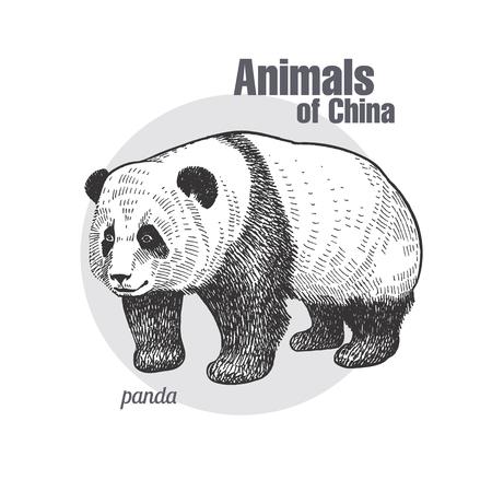 クマパンダ手描き。中国シリーズの動物たち。ヴィンテージ彫刻スタイル。ベクターアートイラスト。黒いグラフィックは、白い背景に分離します