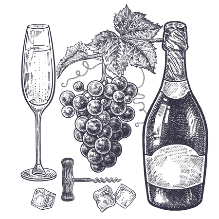 Vintage hand drawing on subject of alcohol. Bottles with champagne, grapes, wine glass with drink, ice slices and corkscrew.