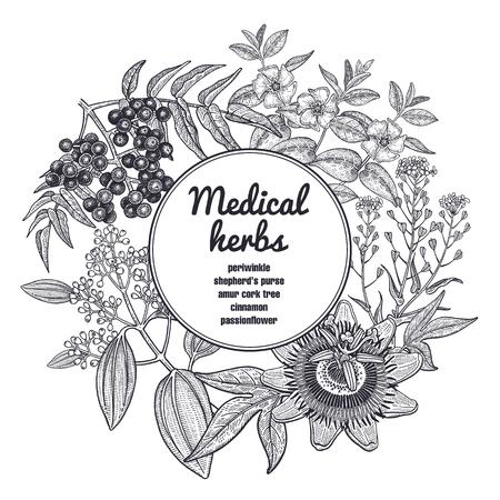 Samenstelling met medische kruiden en plaats voor inscriptie. Vintage stijl gravure Handtekening.