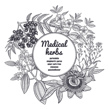 Composition with medical herbs and place for inscription. Vintage style engraving. Hand drawing.