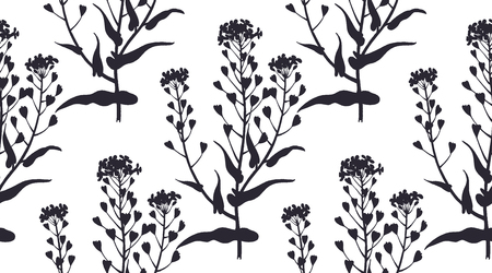 Medical herbs seamless pattern. Silhouettes of plant shepherds purse. Vector illustration. Hand drawing. Black and white. Template for creating paper, textiles, wallpaper.