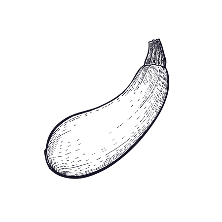 Squash. Hand drawing of vegetable. Vector art illustration. Isolated image of black ink on white background. Vintage engraving. Kitchen design for decoration recipes, menus, signage shops and markets. Imagens - 94364872