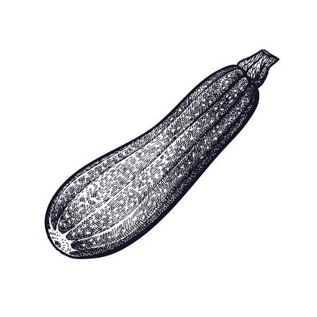 서양 호박. 야채 손 그리기입니다. 벡터 아트 그림입니다. 흰색 배경에 검정 잉크의 고립 된 이미지. 빈티지 조각. 장식 조리법, 메뉴, 사인 가게, 시장