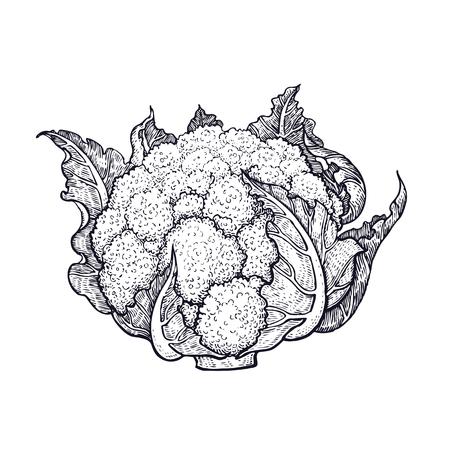 カリフラワー。野菜の手描き。ベクターアートイラスト。白い背景に黒インクの分離画像。