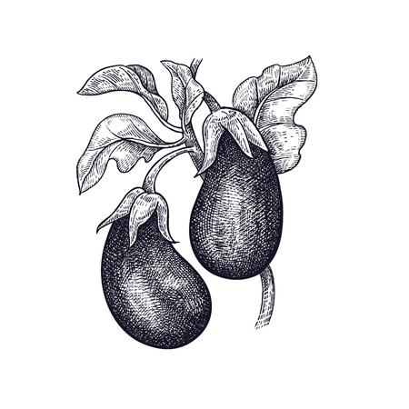 가지. 야채 손 그리기입니다. 벡터 아트 그림입니다. 흰색 배경에 검정 잉크의 고립 된 이미지.