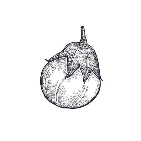 가지. 야채 손 그리기입니다. 벡터 아트 그림입니다. 흰색 배경에 검정 잉크의 고립 된 이미지. 빈티지 조각. 장식 요리법, 메뉴, 기호 상점, 시장에 대  일러스트