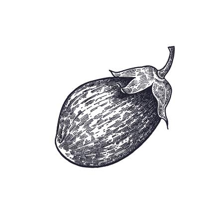 Eggplant. Hand drawing of vegetable. Vector art illustration. Isolated image of black ink on white background. Vintage engraving. Kitchen design for decoration recipes, menus, sign shops, markets.