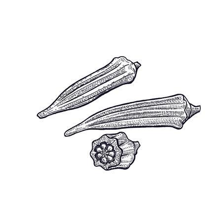 바미 야. 야채 손 그리기입니다. 벡터 아트 그림입니다. 흰색 배경에 검정 잉크의 고립 된 이미지. 빈티지 조각. 장식 요리법, 메뉴, 기호 상점, 시장에  일러스트