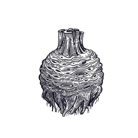 Celery vector art illustration. Illusztráció