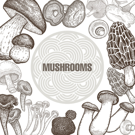 Poster with variants of old engraving mushroom vintage template for the cover or signboard of shop, market, packaging design, and advertising. Stock Illustratie