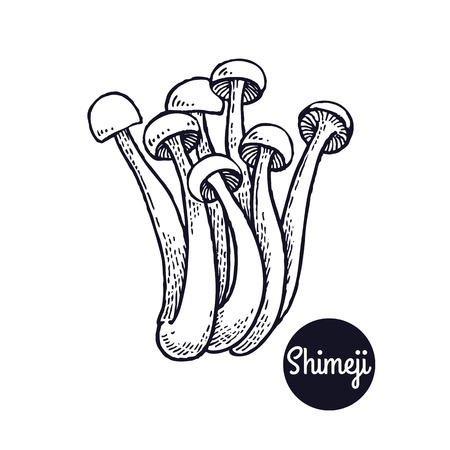 Hand drawing a gourmet mushroom Shimeji style vintage engraving graphics in black ink isolated objects of nature cooking food design. Ilustração