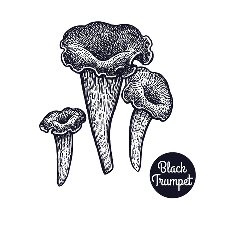 Hand drawing a gourmet mushroom Black Trumpert style vintage engraving graphics in black ink isolated objects of nature cooking food design.