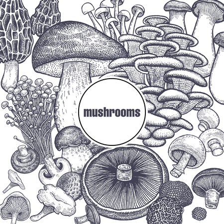 Edible mushroom poster. Bolete, Portobello, Shimeji, Champignon, Oyster mushrooms, Enoki, King trumpet, Black truffle, Morel and Chanterelle. Black, white. Vector illustration vintage engraving Stock Illustratie