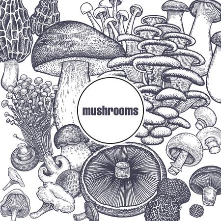 Edible mushroom poster. Bolete, Portobello, Shimeji, Champignon, Oyster mushrooms, Enoki, King trumpet, Black truffle, Morel and Chanterelle. Black, white. Vector illustration vintage engraving Vettoriali