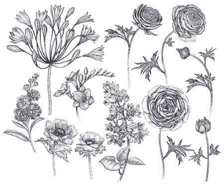 春の花の孤立セット。手描きアフリカユリ、ラナンキュラス、アネモン、ライラック、フリーシア、白い背景に紫色の黒インク。ベクターイラスト