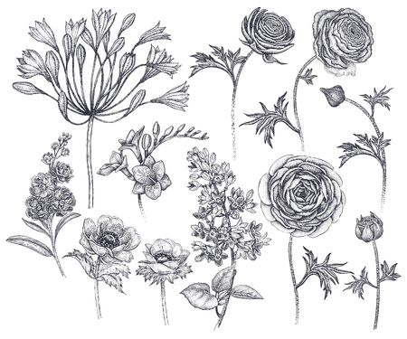 Spring flowers isolated set. Hand drawing African lily, ranunculus, anemones, lilac, freesia, violet black ink on white background. Vector illustration art floral design. Vintage engraving Vettoriali