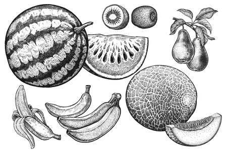 Fruits set in black and white hand drawing Illustration.