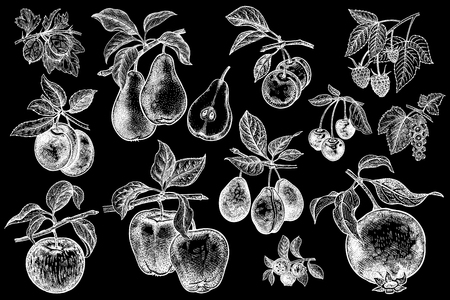 Berries and fruit big set. Apple, pear, plum, cherry, garnet, blueberry, raspberry, gooseberry, currant, isolated. White chalk on a black board. Hand drawing realistic. Vintage vector illustration. Ilustração