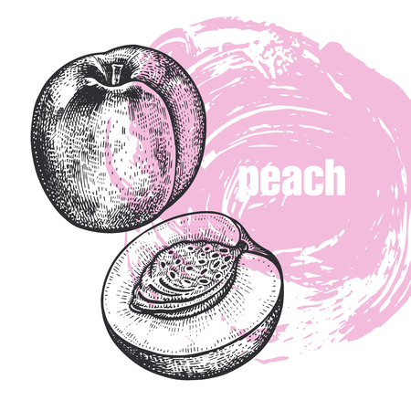 Peach. Realistic vector illustration of fruit isolated on white background. Hand drawing sketch. Design for package of health and beauty natural products. Vintage black and white engraving
