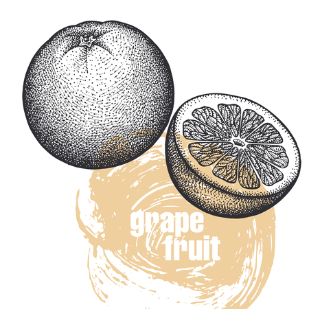 Grapefruit. Realistic vector illustration of fruit isolated on white background. Hand drawing sketch. Design for package of health and beauty natural products. Vintage black and white engraving
