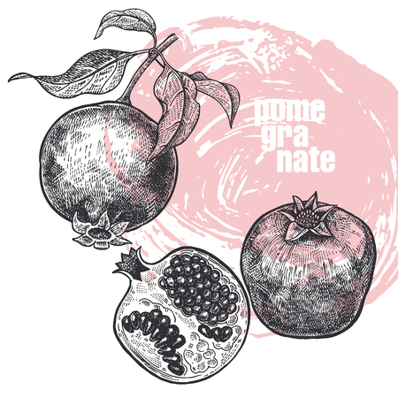 Pomegranate. Realistic vector illustration of fruit isolated on white background. Hand drawing sketch. Design for package of health and beauty natural products. Vintage black and white engraving