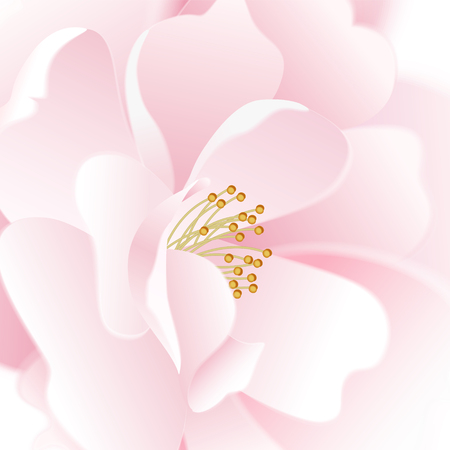 Rose. Macro effect. Vector card. Garden flower hand drawing pastel. Realistic floral illustration - design template luxury packing, wrapping paper. Pink flower on white background. Blurred image. Vetores