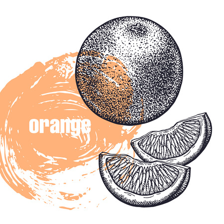 Orange. Realistic vector illustration of citrus fruit isolated on white background. Hand drawing sketch. Design for package of health and beauty natural products. Vintage black and white engraving