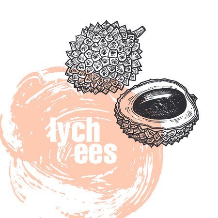 Lychee. Realistic vector illustration of fruit isolated on white background. Hand drawing sketch. Design for package of health and beauty natural products. Vintage black and white engraving