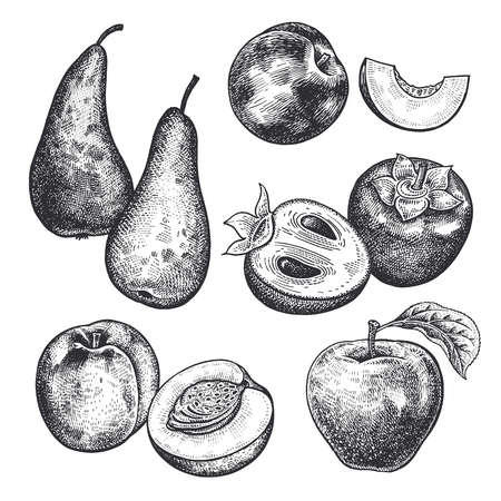 Berries and fruit set. Realistic apple, pear, persimmon, nectarine, peach isolated on white background. Hand drawing sketch. Vintage engraving. Black and white. Vector. Ilustração