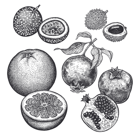Berries and fruit set. Realistic grapefruit, pomegranate, passion fruit, lychee isolated on white background. Hand drawing sketch. Vintage engraving. Black and white. Vector.