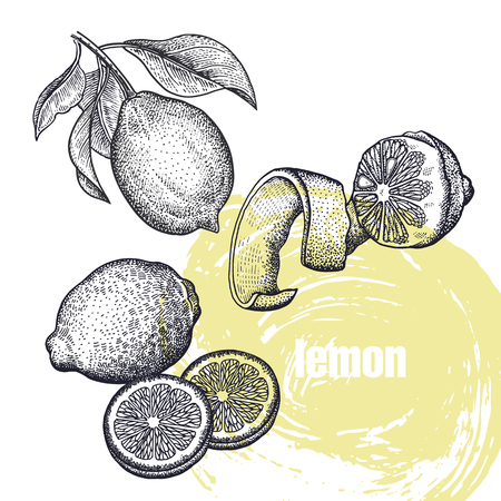 Lemon. Realistic vector illustration of citrus fruit isolated on white background. Hand drawing sketch. Design for package of health and beauty natural products. Vintage black and white engraving Ilustração