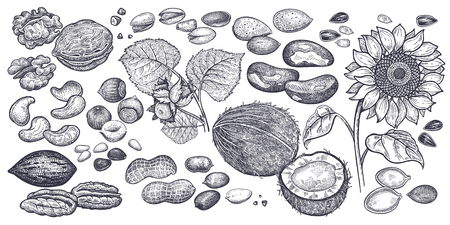 Hazelnut, walnut, peanuts, almond, cashew, pistachio, Brazilian nut, sunflower seeds and pumpkin seeds realistic isolated. Vector illustration. Vintage engraving art. Hand drawing. Black and white. 일러스트