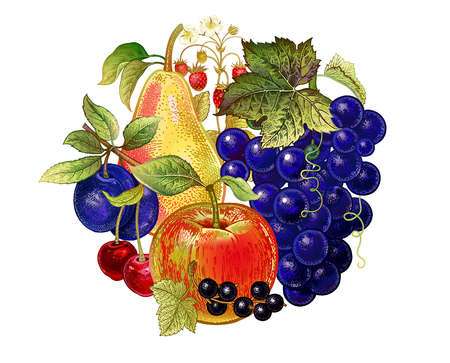 Realistic fruit decoration. Grapes, apples, cherries, currants, pears, plums, strawberries on white background. Vector illustration art. Kitchen design. Template for signs food stores, markets, menus.
