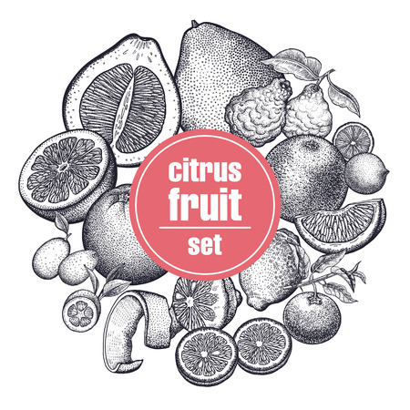 Decoration with citrus fruits and berries. Orange, lemon, lime, mandarin, pomelo, grapefruit, bergamot and kumquat. Black and white. Vintage vector illustration art. Hand drawing. Kitchen design.