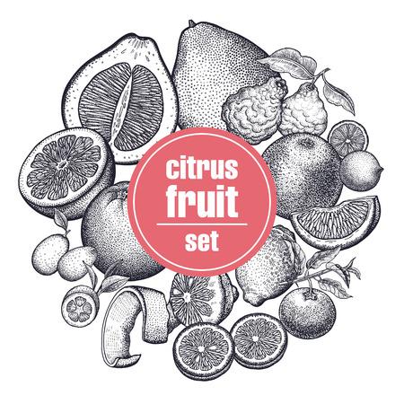 Decoration with citrus fruits and berries. Orange, lemon, lime, mandarin, pomelo, grapefruit, bergamot and kumquat. Black and white. Vintage vector illustration art. Hand drawing. Kitchen design.