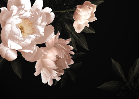 Tarjeta vintage floral con flores. Peonías, tulipanes, lirios, hortensias sobre fondo negro. Plantilla para el diseño de invitaciones de boda, saludos navideños, tarjetas de visita, envases de decoración