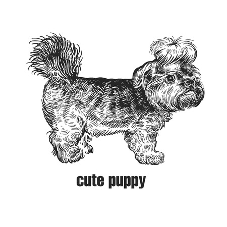 Cute puppy. Home pet isolated on white background. Sketch. Vector illustration art. Realistic portrait of animal in style vintage engraving. Black and white hand drawing of Yorkshire Terrier dog. Ilustrace
