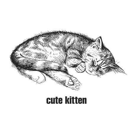 Cute kitten is sleeping. Home pet isolated on white background. Sketch. Vector illustration art. Realistic portrait of animal in style vintage engraving. Black and white hand drawing of cat.  イラスト・ベクター素材